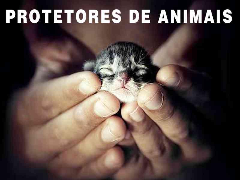 Sancionadas leis em defesa e proteção dos animais em Londrina, PR