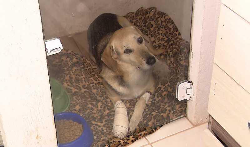 O cachorro precisou passar por uma cirurgia na pata para retirar os fragmentos de bala — Foto: Reprodução/RPC