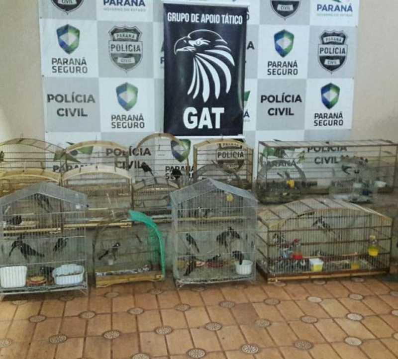 Mais de 100 pássaros foram encontrados em um quarto usado como cativeiro em Arapongas, PR