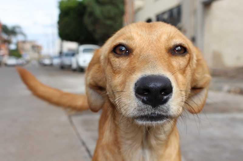 Câmara aprova projeto que define multas para quem maltratar animais em Cambé, PR