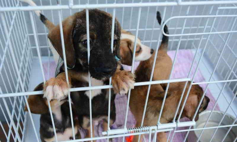 CCJ aprova projeto que proíbe venda de cães e gatos em pet shops e clínicas no Paraná
