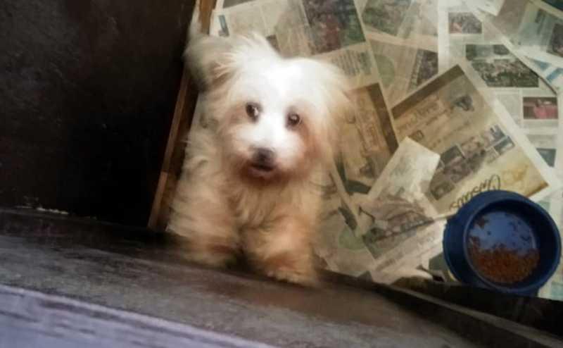 Mais um canil irregular é descoberto em Curitiba e 36 cães de raça são apreendidos