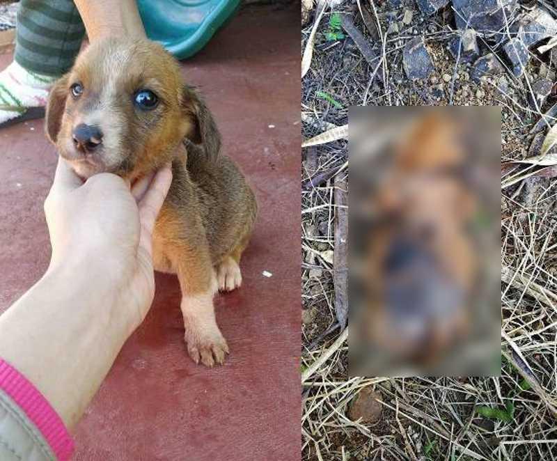 Filhote de cachorrinha é morta e tem as quatro patas decepadas em Luiziana, PR