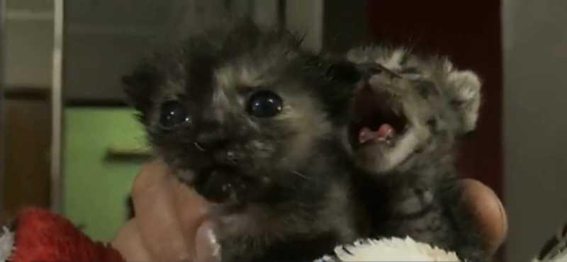 Filhotes de gato são resgatados dentro de sacola com cal em Ponta Grossa, PR