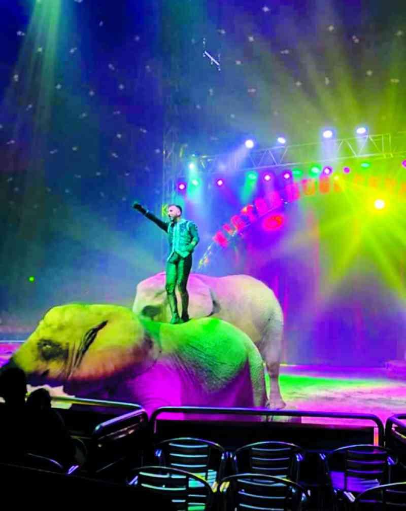 Portugal: circo usou animais selvagens em espetáculos mesmo contra deliberação camarária