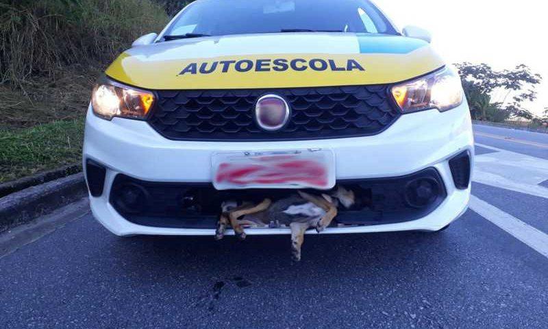 Animal foi encontrado preso na estrutura do veículo após ser atropelado em Angra dos Reis — Foto: Tobias Pencinato/Arquivo Pessoal