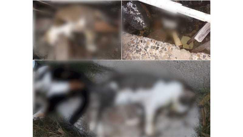 Pelo menos oito gatos morreram com suspeita de envenenamento em Arraial do Cabo, no RJ — Foto: Projeto Animal de Arraial/Divulgação
