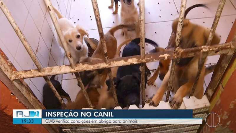 OAB encontra cães com carrapatos e em ambientes com fezes e urina no Canil Municipal de Cabo Frio, RJ