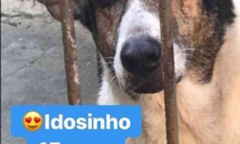 Cães idosos são ignorados em campanhas de adoção e passam a vida inteira em abrigos