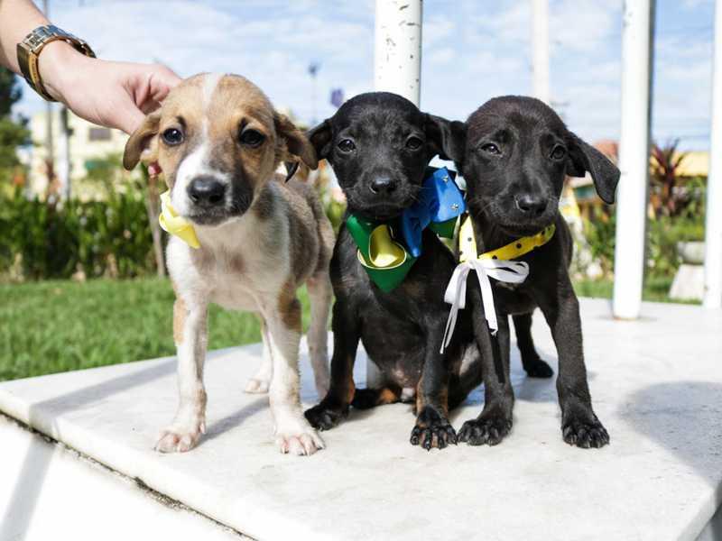 'CCZ convida' promove adoção e vacinação de cães e gatos em Campos, no RJ