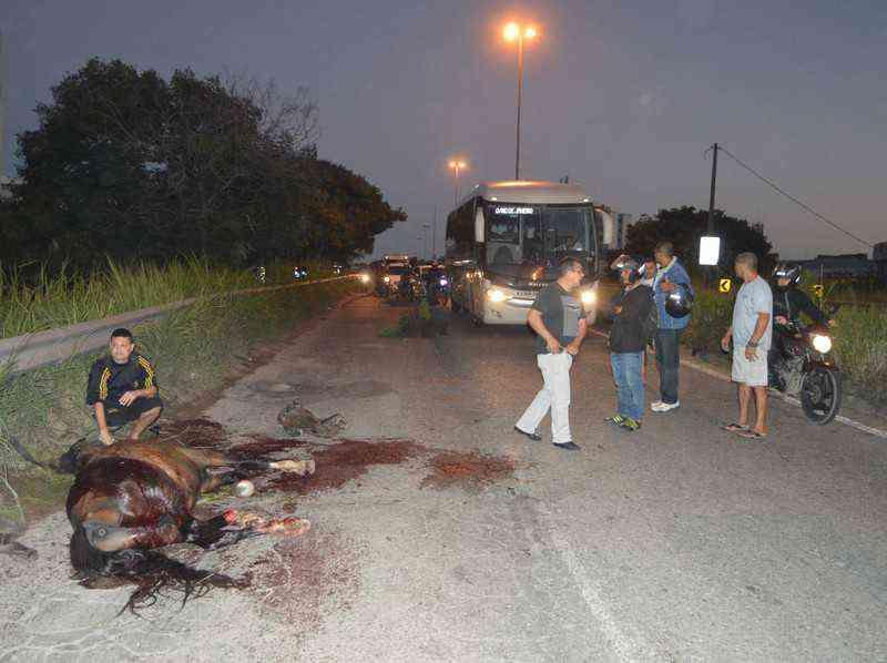 Cavalo atropelado agoniza por horas na RJ-104