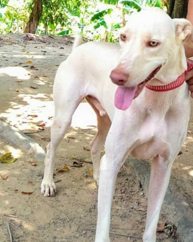 Titã como é chamado foi resgatado da rua no ano passado por grupo de proteção animal — Foto: Divulgação/Amigos Peludos