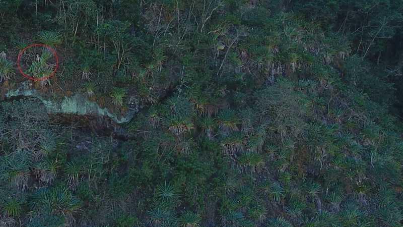 Titã foi resgatado pelo Corpo de Bombeiros em uma montanha em Conceição de Macabu — Foto: Élida Braga/Arquivo pessoal