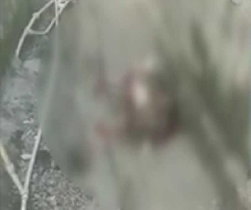 Moradores filmaram o animal depois de levar um tiro em um beco no local conhecido como Merendiba e afirmam que os militares atiraram sem nenhuma razão aparente.