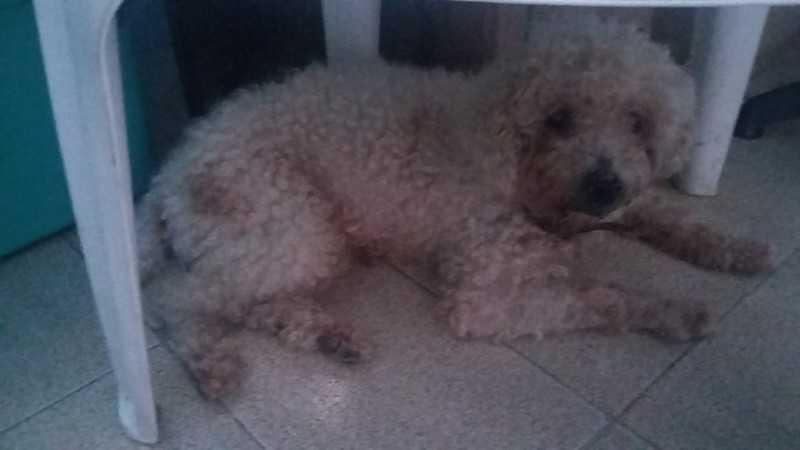 Cão abandonado em São Gonçalo (RJ) é adotado após reportagem