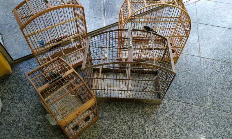 Quatro pássaros silvestres são resgatados pela Polícia Ambiental em São Pedro da Aldeia, no RJ — Foto: Divulgação/Linha Verde