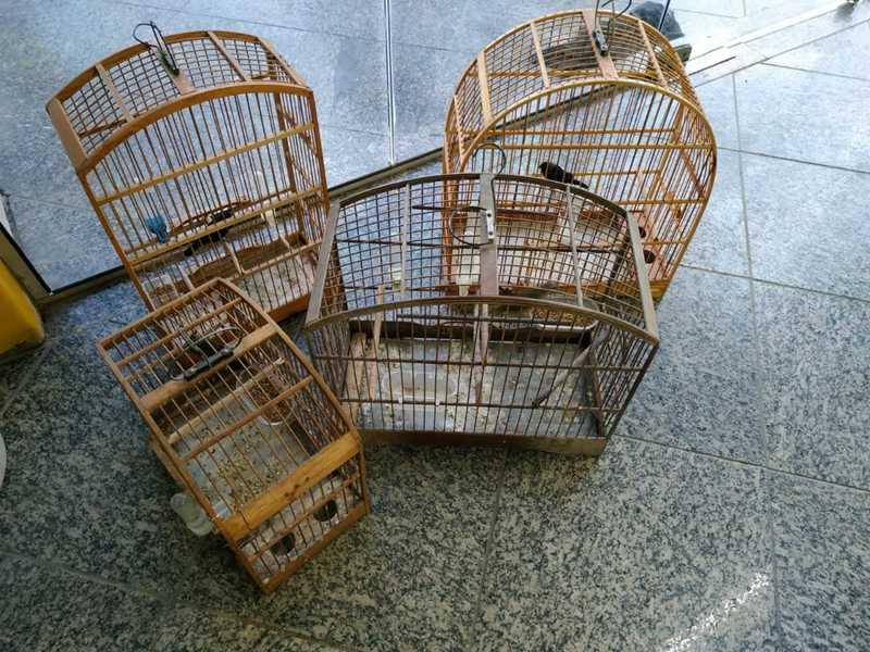 Pássaros silvestres são resgatados em São Pedro da Aldeia, no RJ