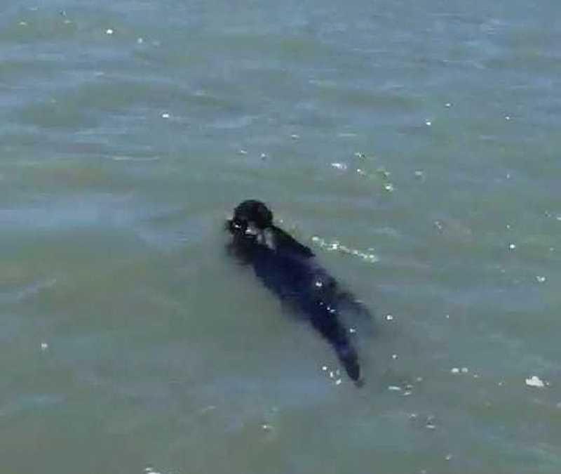 Macaco foi encontrado por pescadores em praia do litoral sul potiguar — Foto: Reprodução