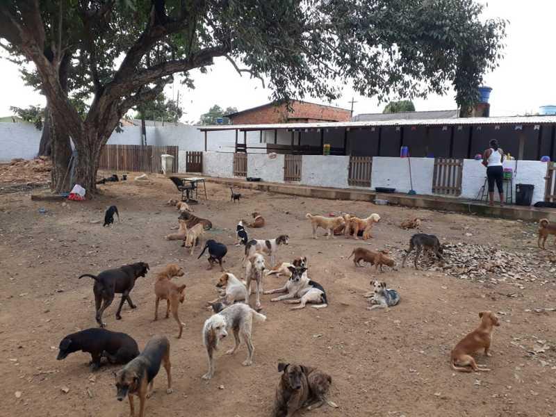 Abrigo Voluntário Animal, em Porto Velho, pede doações — Foto: Iule Vargas/Rede Amazônica