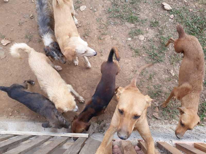 Abrigo Voluntário Animal, em Porto Velho — Foto: Iule Vargas/Rede Amazônica