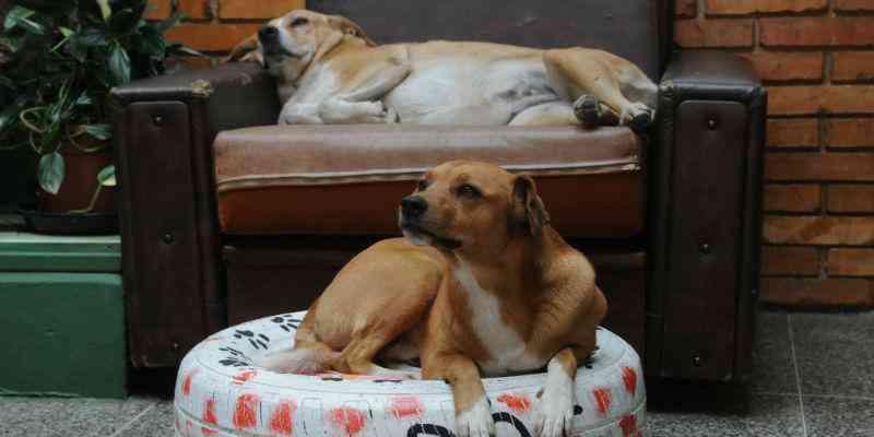 Ação de alunos garante permanência de cães em escola de Canela, RS