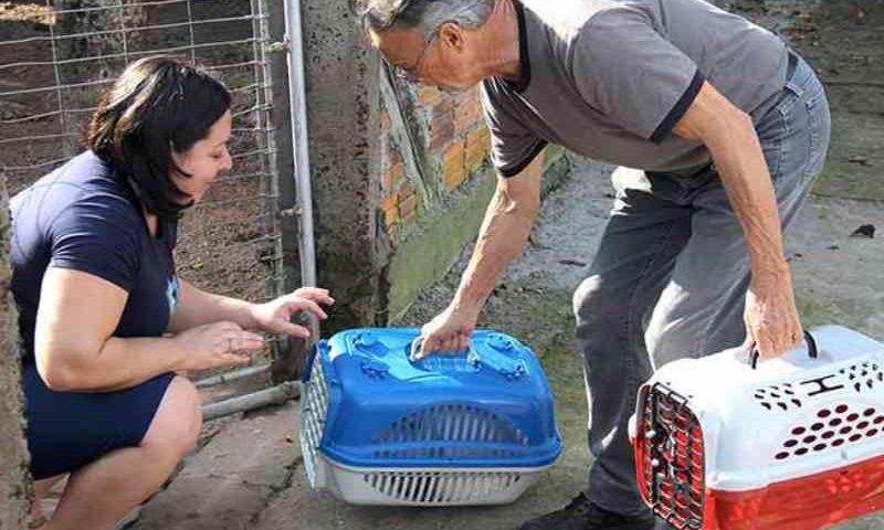 Número de castrações de cães e gatos aumenta 26% em Esteio, RS