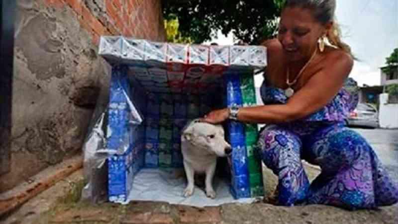 Empresária cria casinhas para animais de rua com caixa de leite