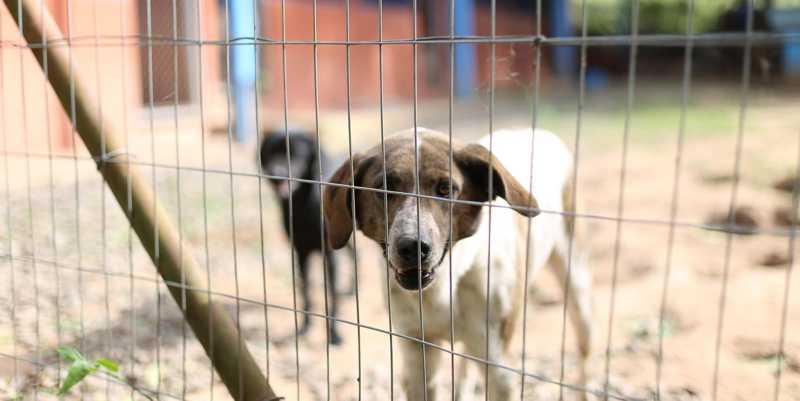 Centro de Bem-Estar Animal será inaugurado sábado em Campo Bom, RS