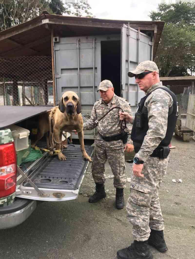 Cadela é encontrada dentro de rio e resgatada pela Guarda Municipal de Balneário Camboriú, SC