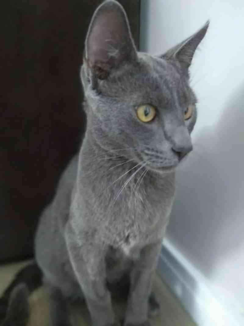 Envenenamento de gatos preocupa comunidade de bairro de Florianópolis, SC