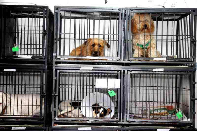 Mutirão de castração de cães e gatos abre inscrições em São José, na Grande Florianópolis, SC