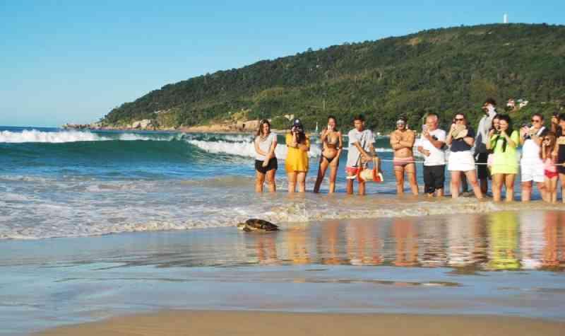 Tartaruga capturada por rede de pesca é devolvida ao mar em Florianópolis, SC