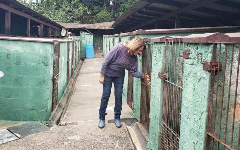 Campanha de R$ 2 para ajudar animais abandonados em Joinville, SC