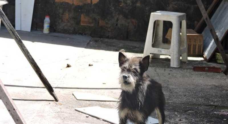 Projeto de lei cria Delegacia Eletrônica de Proteção Animal em Sergipe - ABSE