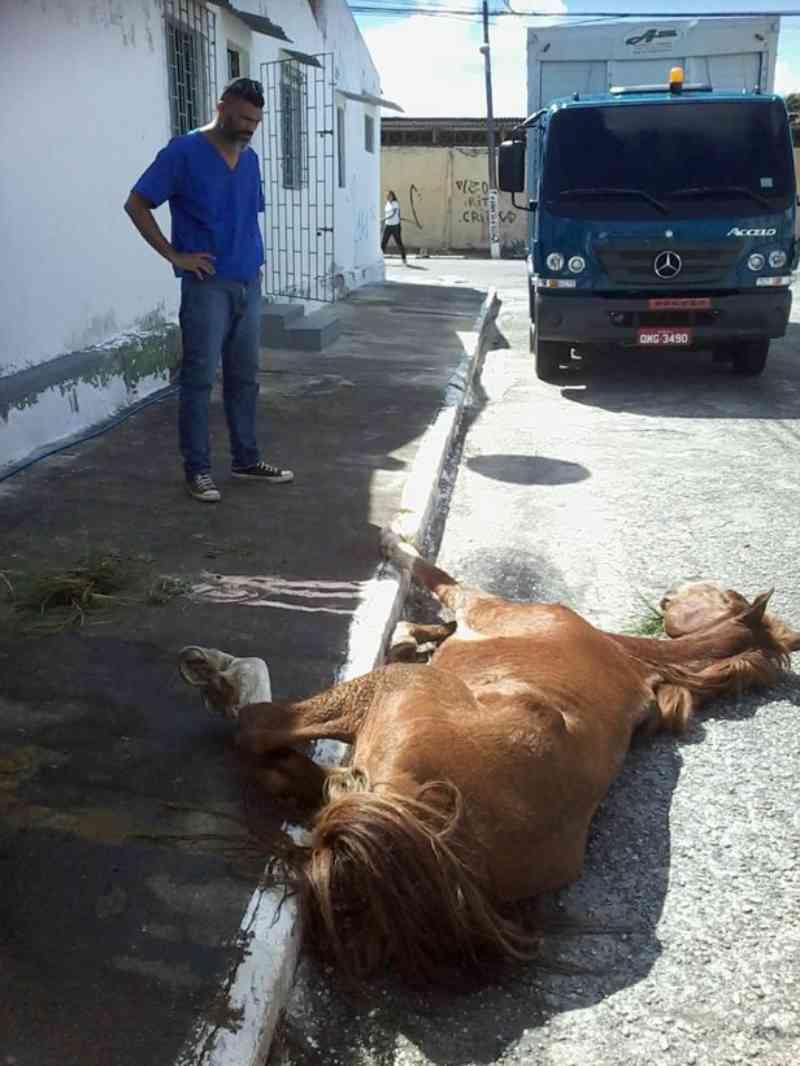 Cavalo é abandonado com sinais de maus-tratos em Aracaju, SE