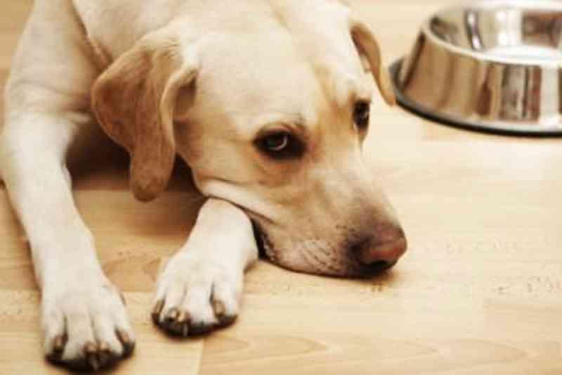 Denúncias de maus-tratos a animais são recorrentes na região do ABC Paulista