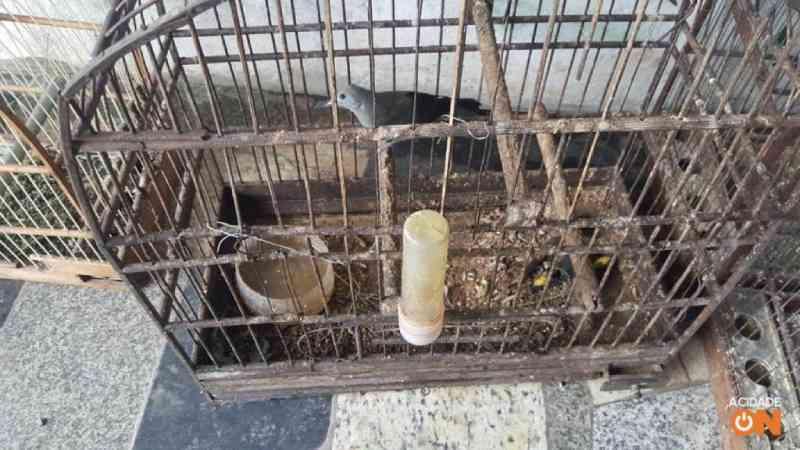 Polícia resgata 43 pássaros e multa homem em R$ 150 mil em Americana, SP