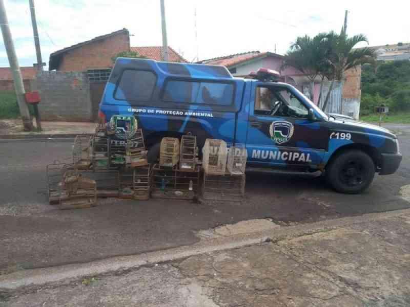 Guarda Civil encontra aves silvestres mantidas em cativeiro em Botucatu, SP