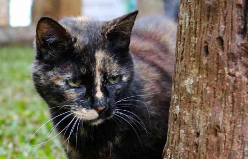 Gatos estão sendo mortos por cães sem guia na Lagoa do Taquaral, em Campinas, SP