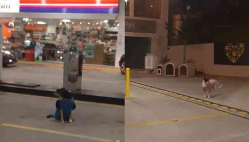 Posto de combustíveis oferece casinhas e roupas de frio para cachorros de rua em Campinas, SP