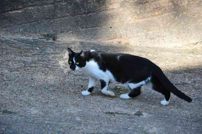 Moradores denunciam envenenamento de gatos em Presidente Prudente, SP