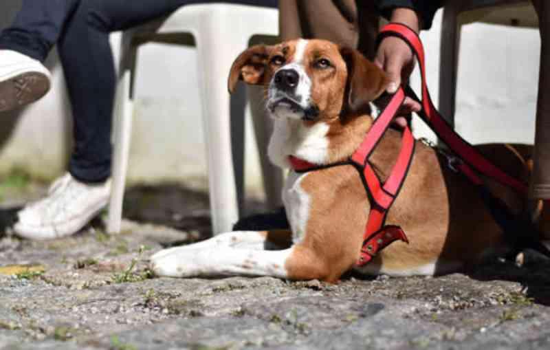 Ribeirão Pires (SP) já realizou mais de 1400 castrações gratuitas de animais