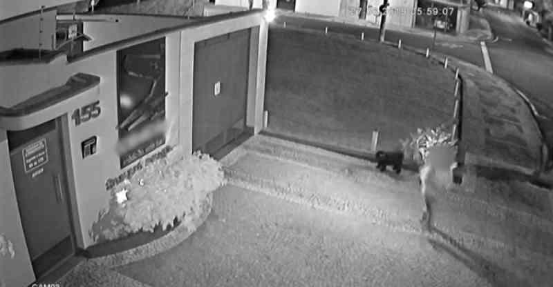 Imagens mostram cão sendo deixado em frente a clínica; animal ganhou nome e é cuidado