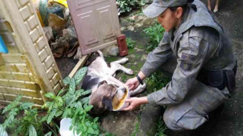 Cão sofre maus-tratos em S.Bernardo (SP) e tutora é multada em R$ 6 mil; Veja vídeo