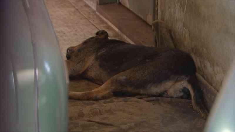 Polícia Civil encontra animais com sinais de maus-tratos dentro de casa em Rio Preto, SP