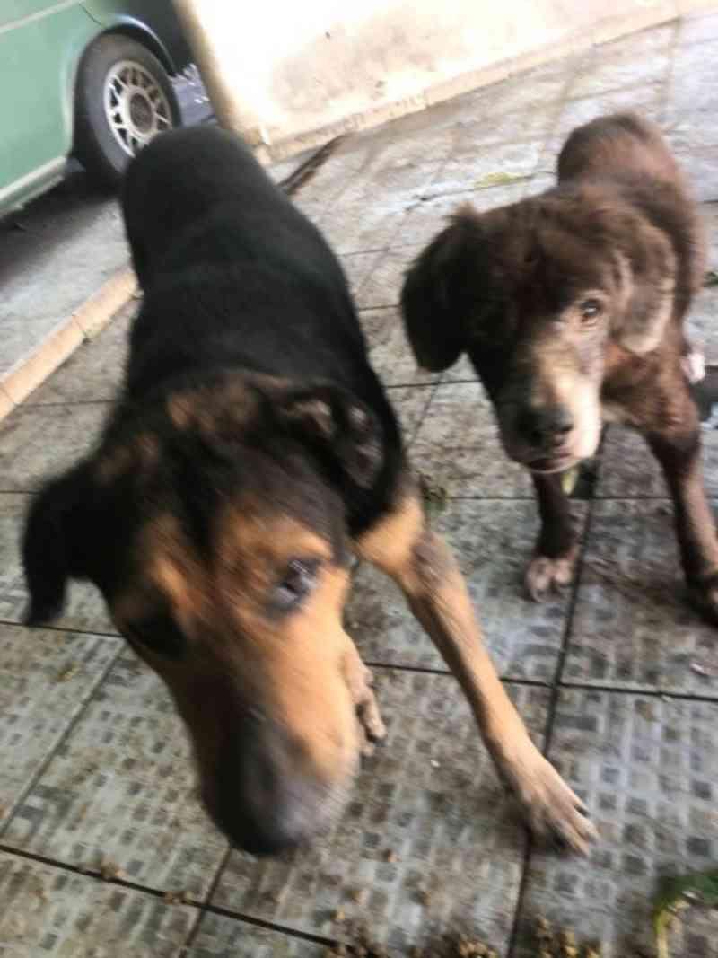 Polícia vai investigar denúncia de maus-tratos contra animais em São José do Rio Preto, SP