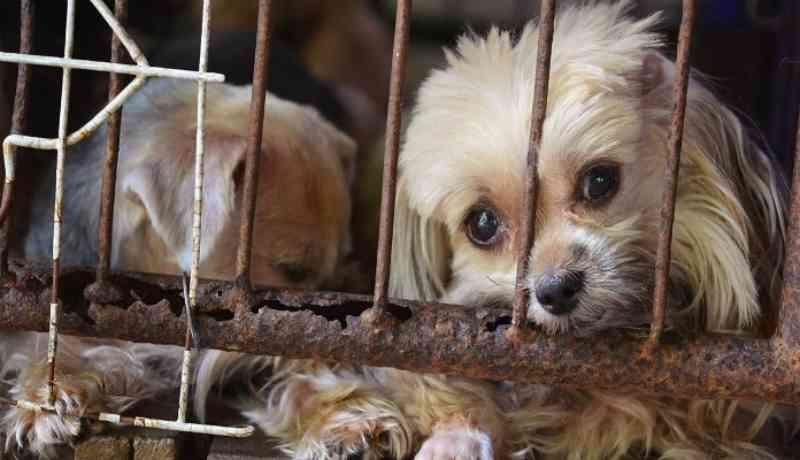 Projeto pune maus-tratos a animais em São Pedro, SP