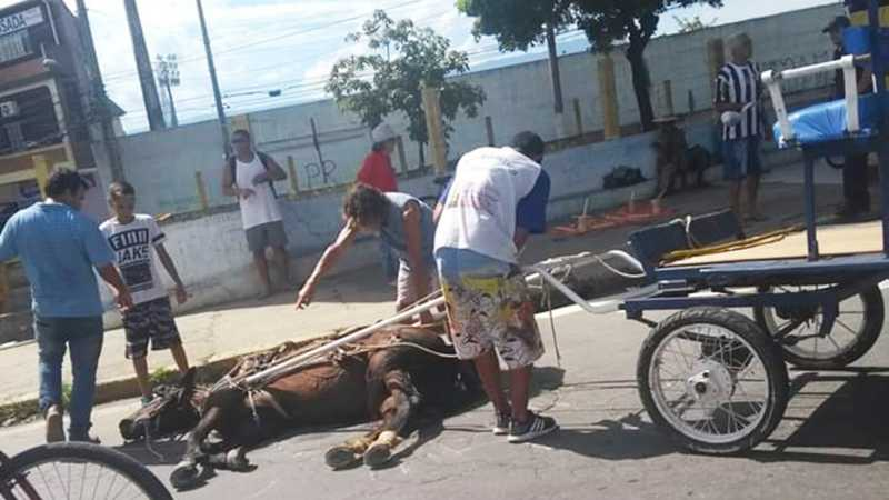 Cavalo que puxava uma charrete usada para carregar romeiros desmaiou de tanto cansaço em Aparecida, SP, 19/01/2019.