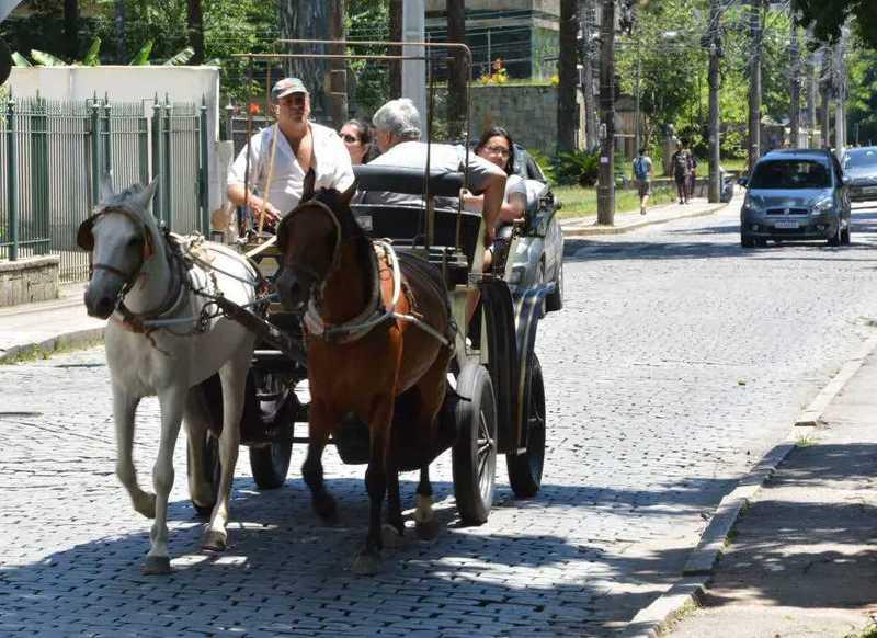 Por pressão de entidades de defesa dos animais, cidades vetam passeios de charrete