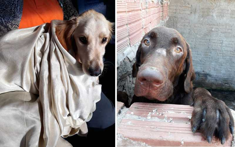 Cães se recuperam após serem resgatados com mutilações e desnutridos em Bebedouro, SP